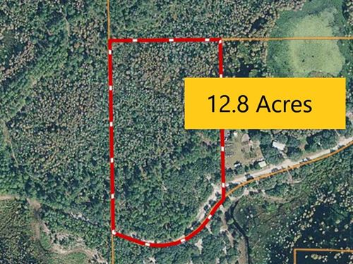 Wooded Acreage In Trenton, Florida : Trenton : Gilchrist County : Florida