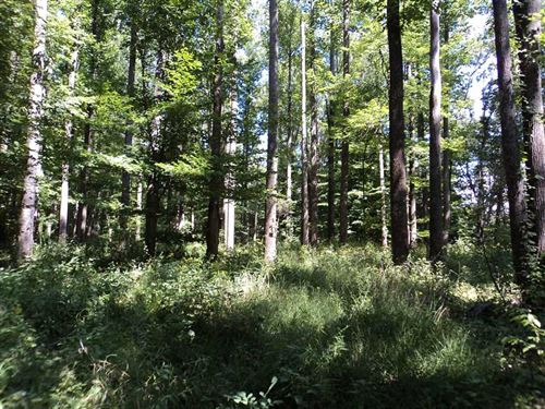 30 Acre Whitetail Haven In Sweet : Spencer : Owen County : Indiana