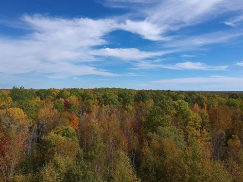 Land Hinckley MN Wooded Hunting 10 : Hinckley : Pine County : Minnesota