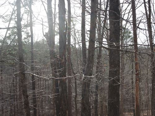 Timber / Hunting Property Missouri : Ava : Douglas County : Missouri