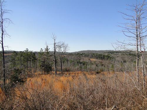 Large Acreage Under $1000 Per Acre : Ava : Douglas County : Missouri