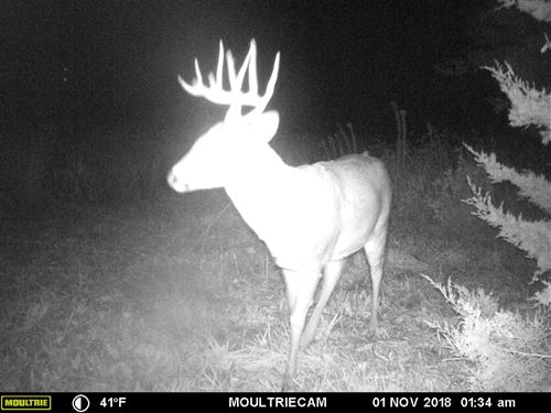 Hunting Land In Northwest MO : Denver : Gentry County : Missouri