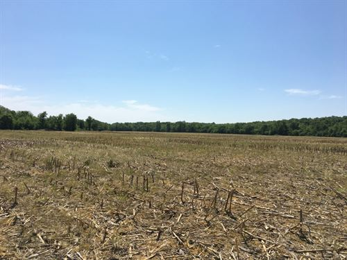 383 Acres, 4 Roi, Highly Tillable : Pattonsburg : Daviess County : Missouri