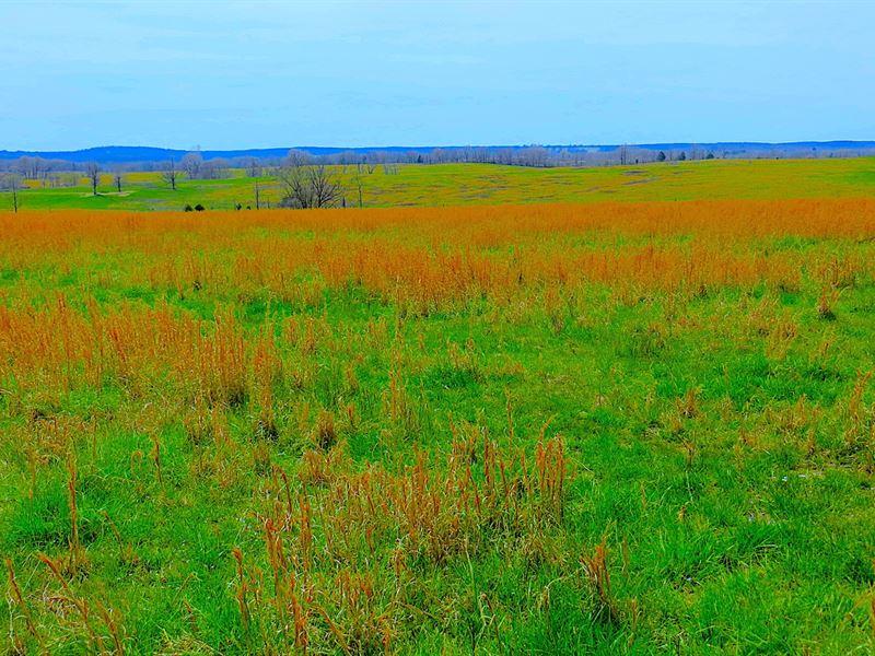 Cattle Ranch : Myrtle : Oregon County : Missouri