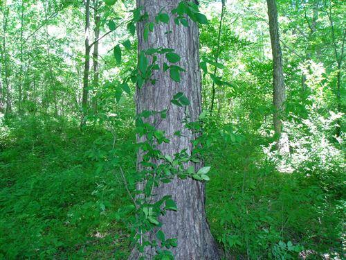 Hunting Property S, E, Mo, Close to : Puxico : Stoddard County : Missouri
