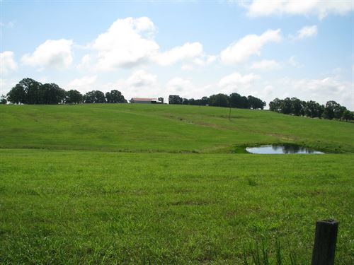 297 Acre Cattle Farm Panoramic : Thornfield : Ozark County : Missouri