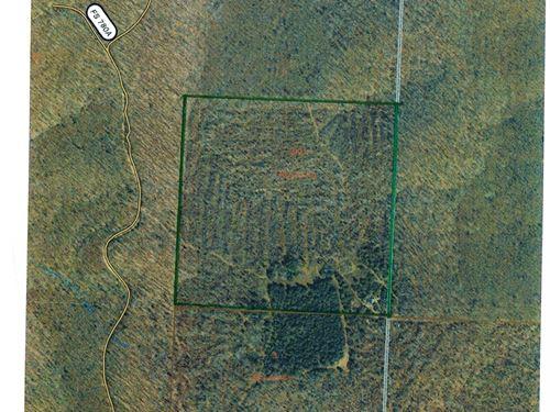 Missouri Ozarks Hunting : West Plains : Howell County : Missouri