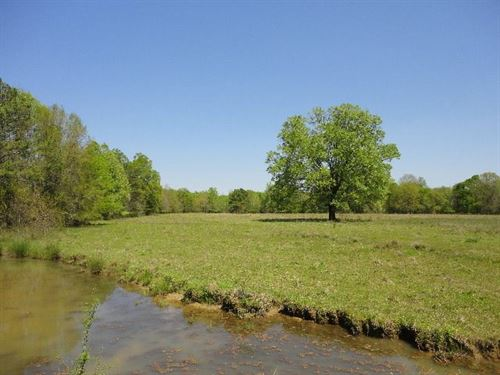 Land 16 Acres Scott County Forest : Forest : Scott County : Mississippi