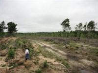 Hunting Land Forrest County Petal : Petal : Forrest County : Mississippi