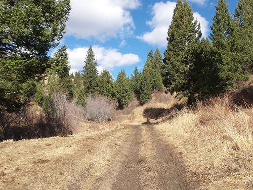 Bridger Mountain Hunting Recreation : Bozeman : Gallatin County : Montana