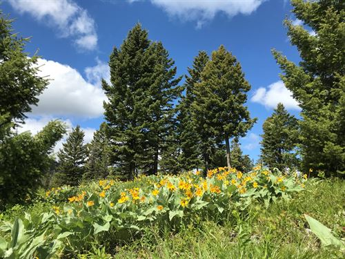 Hunting Land For Sale : Drummond : Granite County : Montana