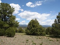 Chama NM Land Excellent Pasture : Chama : Rio Arriba County : New Mexico