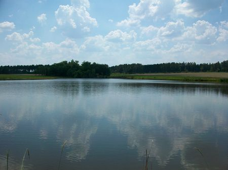 95 Acres Of Pasture W/ 6 Acre Pond : Rochelle : Wilcox County : Georgia