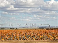 Estancia Valley NM Center Pivot : Estancia : Torrance County : New Mexico