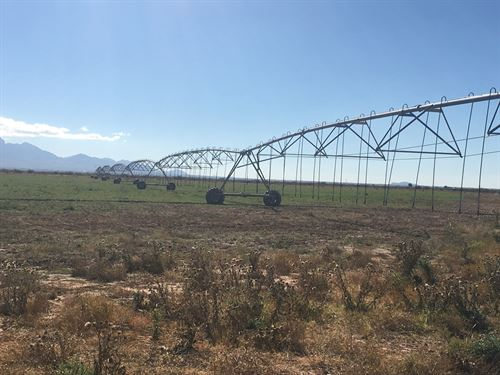 Irrigated Farm Las Cruces New : Las Cruces : Dona Ana County : New Mexico