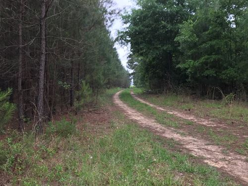 57Ac Carter Rd Tract Hunting Timber : Allendale : South Carolina