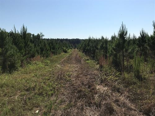 245 Acre Hunting/Timberland : Appleton : Allendale County : South Carolina