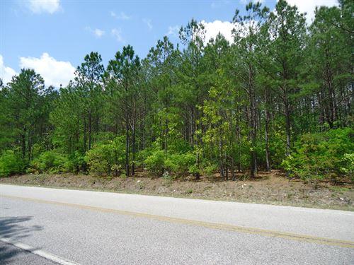 4.3 Wooded Acres Level Building Lot : Cassatt : Kershaw County : South Carolina