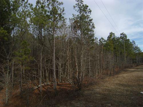 Beautiful 5.7 Acres Wooded Level : Cassatt : Kershaw County : South Carolina