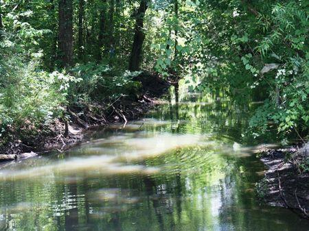 Sawhatchee Creek Farm : Blakely : Early County : Georgia