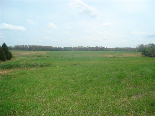Land Tn Pasture, Hobby Farm : Bethel Springs : McNairy County : Tennessee