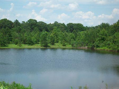 230 Acre Farmland & Hunting : Hawkinsville : Pulaski County : Georgia