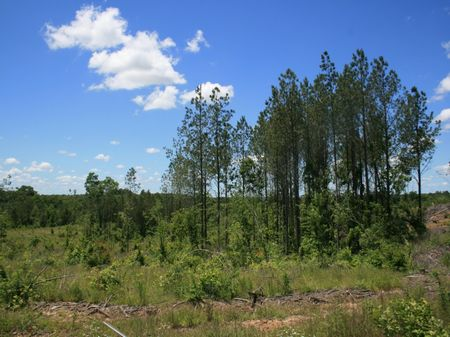 122 Acres Timberland : Cornersville : Marshall County : Mississippi