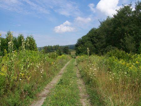 30 Acres Finger Lakes Region In Ny : Mountour : Schuyler County : New York