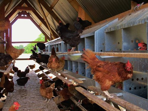 Paisley Farms / Home Business : Bonham : Fannin County : Texas