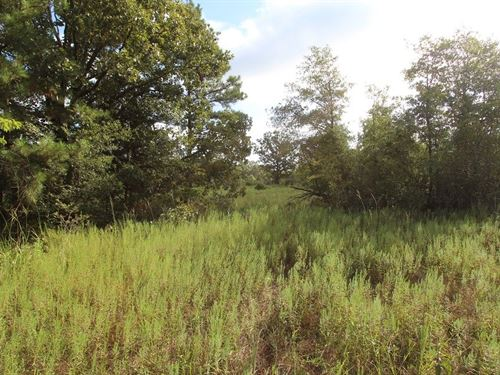 Recreational Hunting Land : Clarksville : Red River County : Texas