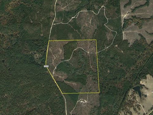 171 Ac Hunting Timber Recreation : Colmesneil : Tyler County : Texas