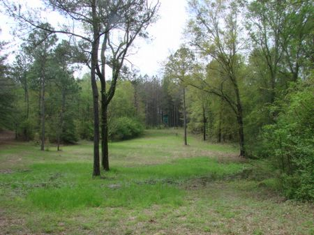 108 Ac. Timber Investment & Hunting : Butler : Taylor County : Georgia