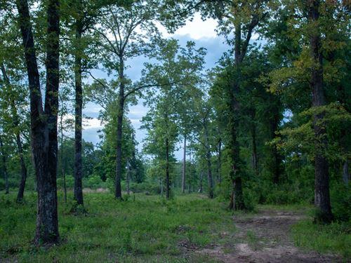 Land Huntington Tx, Hardwood Plot : Huntington : Angelina County : Texas