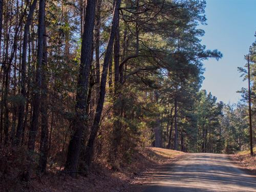5.62 Acres Timberland Hunting : Milam : Sabine County : Texas