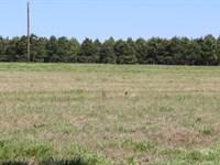 67+ Acres / Pine Plantation : New Boston : Bowie County : Texas