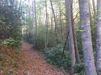 Secluded Hunting Land Mountains : Dugspur : Carroll County : Virginia