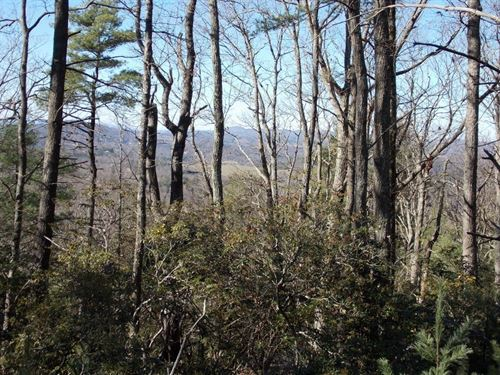 Wooded Building Lot Private Setting : Floyd : Virginia