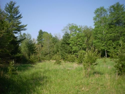 68+ Acres Wooded Land Wythe County : Max Meadows : Wythe County : Virginia
