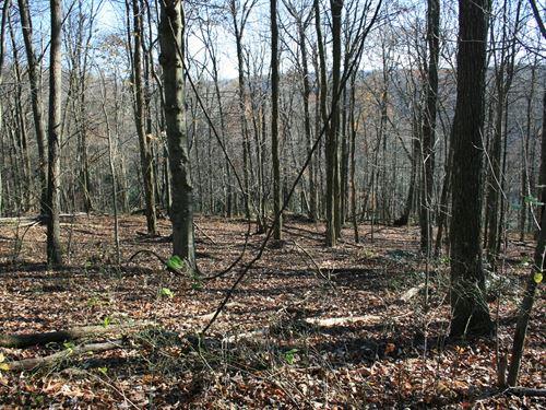 8.6 Acres Land Patrick County : Meadows Of Dan : Patrick County : Virginia