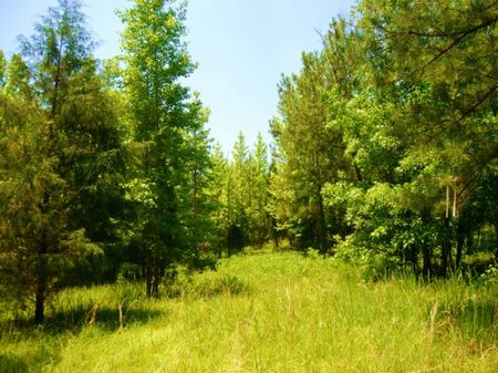 15.94 Acres With Pond : Woodruff : Spartanburg County : South Carolina