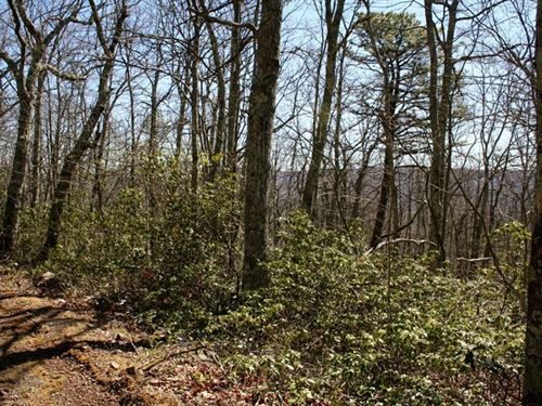 Mountain Acreage In Highland Co, Va : Monterey : Highland County : Virginia