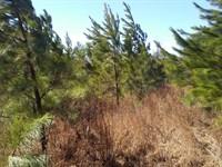 80 Acres Recreational Land Patrick : Stuart : Patrick County : Virginia