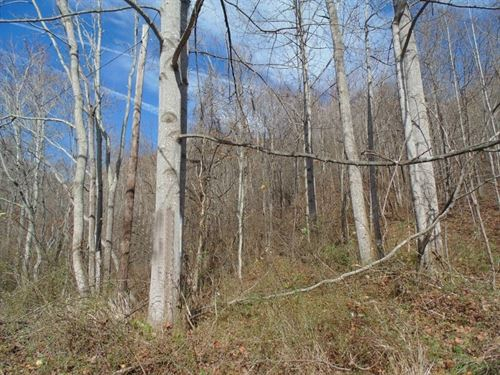 127 Acres In Patrick County Va : Stuart : Patrick County : Virginia