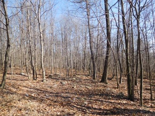 20.1 Acres in Elkhorn : Augusta : Hampshire County : West Virginia