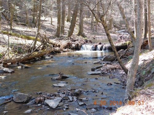 Beautiful 33.95 Acres Bloomery, WV : Bloomery : Hampshire County : West Virginia