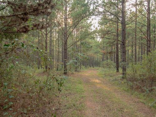 165 Acres Mature Timber Land : Hartford : Geneva County : Alabama