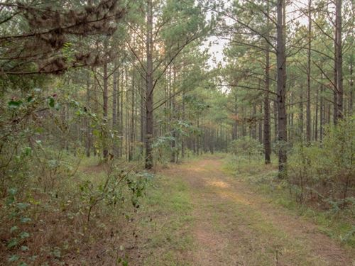 81 Acres Mature Timber, Creek : Hartford : Geneva County : Alabama
