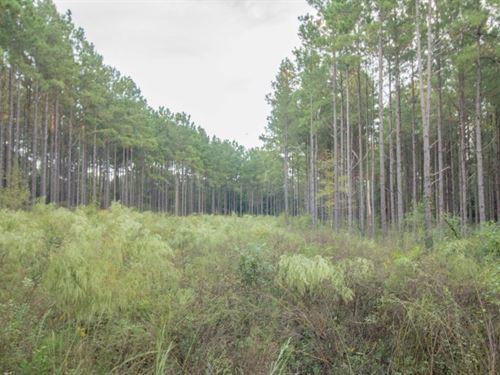 84 Mature Timber Land Hartford : Hartford : Geneva County : Alabama