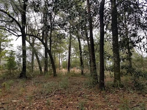 7 Acres Choctawhatchee River Access : Hartford : Geneva County : Alabama