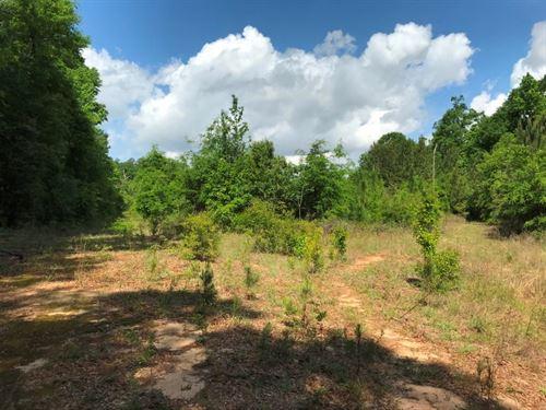 29 Acre Hunting Tract North : Hartford : Geneva County : Alabama
